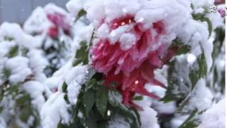 Paul Mauriat _ Tombe La Neige