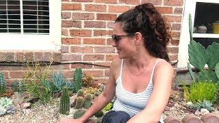 How To Build A Cacti And Succulent Garden With Sucs For You!