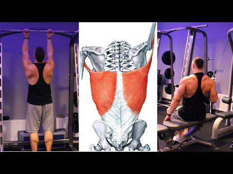 Reinerwacja w mięśniach