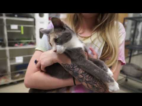 Video: WCJC Animal Shelter, October 5