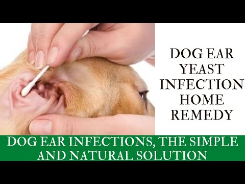 Dog ear yeast infection home remedy | Dog Ear Infections, The Simple And Natural Solution