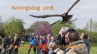 Koningsdag 2018 - Nissewaard Roofvogelshow in Hekelingen