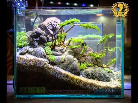 aquascape contest 2016 nano tank