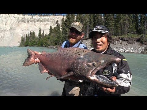 #171 【PART2】アラスカで昇華する少年の日の憧れ~氷河の滴が育む鮭の王様~