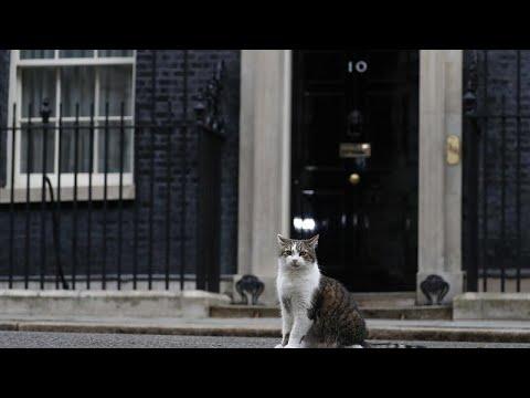 """فيديو القط لاري """"يحتفل"""" بمرور عقد على وصوله لـ""""رئاسة الوزراء"""" البريطانية…"""