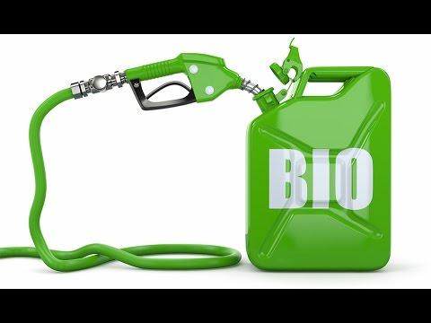 Праздники 10 августа Международный день биодизеля, Независимость Эквадор