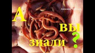 Как разводят червей для рыбалки