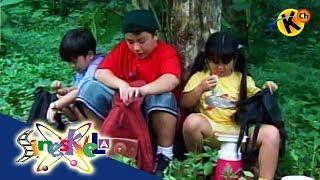 Kindergarten| Basic Needs of Living Things | Sineskwela