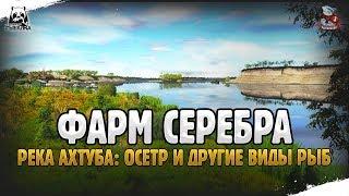 ФАРМ СЕРЕБРА НА РЕКЕ АХТУБА С DRILER | РУССКАЯ РЫБАЛКА 4
