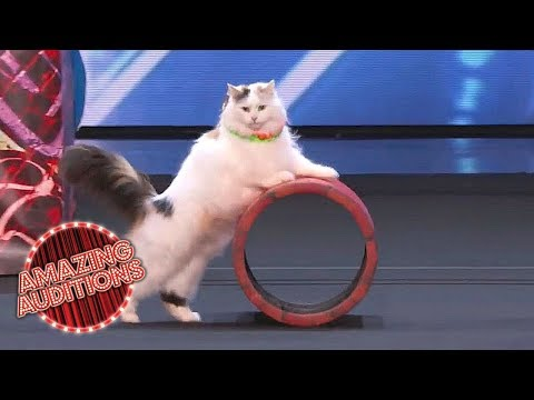America's Got Talent 2018 -  Funniest / Weirdest / Worst Auditions - Part 1 (видео)