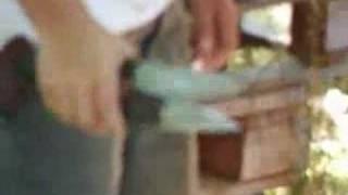 preview picture of video 'Tosatura delle Pecore in Aspromonte'