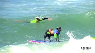 Собаки Катаются на Серфинге. Чемпионат по Серфингу Среди Собак. Веселые собаки. Приколы
