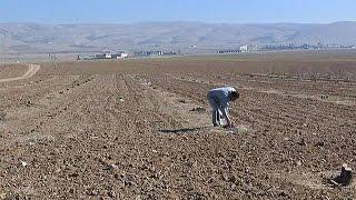 WHEAT - El granero de trigo de Irak saqueado por Dáesh