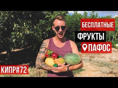 Кипр / Фруктовый Сад / Экзотические Фрукты / Бесплатно / Пафос 2019
