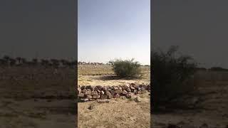 قبر الحسن المثنى بن الإمام الحسن المجتبى ، زوج فاطمة الصغرى بنت الإمام الحسين عليهم السلام