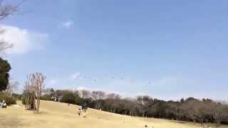 2015.3.21裾野市運動公園上空パラシュート部隊