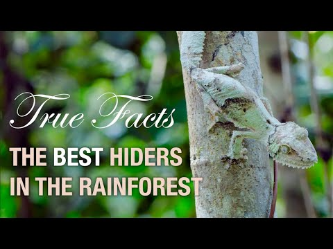 Funny Nature: The Deception in the Forest