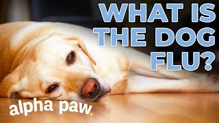 What Is The Dog Flu?