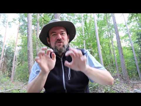 Braunbär - Verbreitung, Ökologie, Verhaltenstipps wenn er kommt...