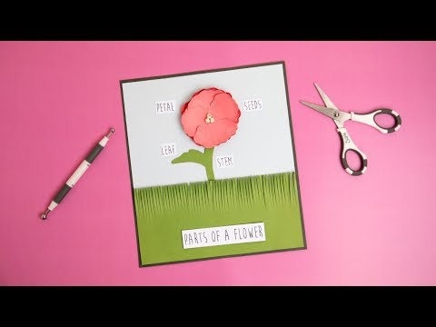 How to Use the Sizzix Paper Sculpting Kit - Ellison Education