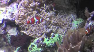Wild Reef Philippines