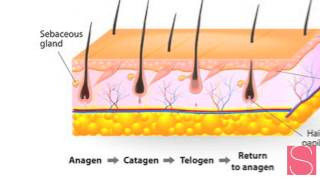 The Science of Permanent Hair removal