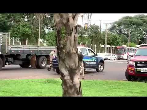 Boi corre atrás de policiais e equipe de TV