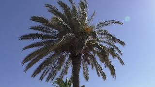 Тунис - Отдых в Хаммамете!