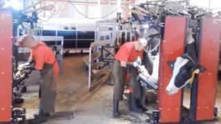 Klauenpflegestrecke Der Defi Woldegk GmbH In Wiesenau - Findeisen Klauenpflege