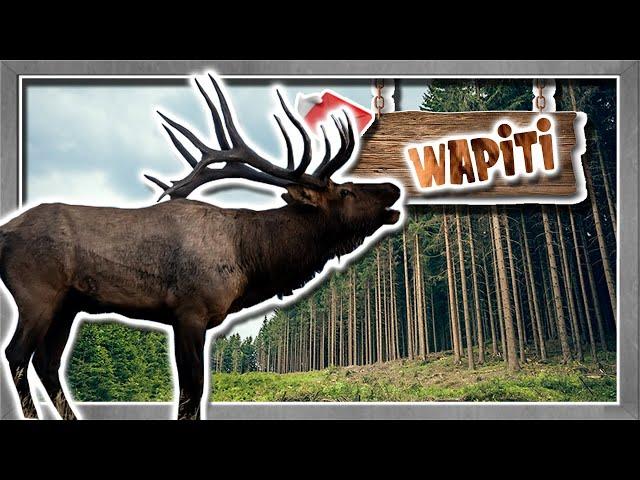 英語のWapitiのビデオ発音