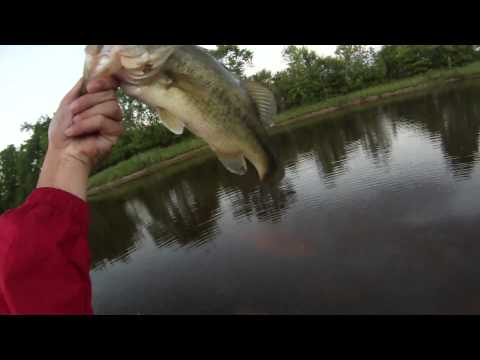 Catching Pond Bass Using Senkos/K&J Wacky RIG'R