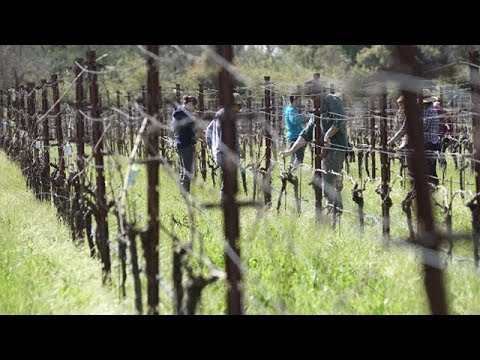 Viticulture, Enology & Wine Business video thumbnail