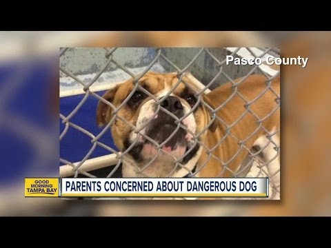Animal considered dangerous dog returns to Holiday neighborhood; family questions it