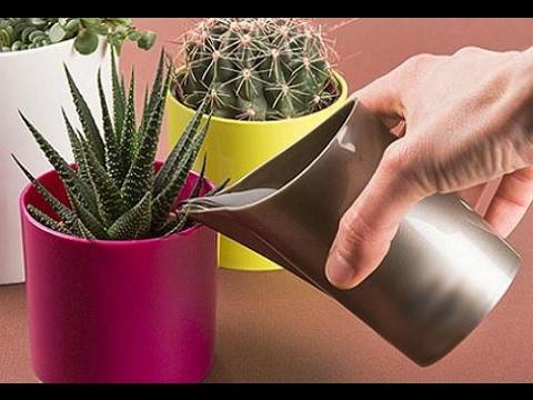 Как правильно ПОЛИВАТЬ комнатные растения | ПОЛИВ ЦВЕТОВ в горшках