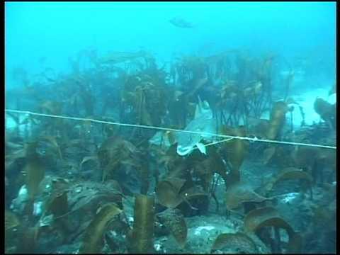 Underwater camera from longline fishing of cod