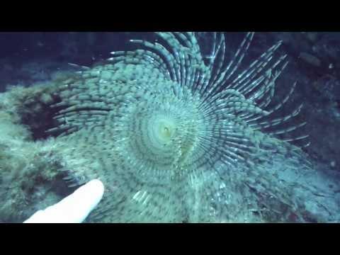 Diving Gozo: MV KARWELA, Wrack Karwela,Gozo,Malta