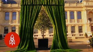 Growing Portraits with Grass | That's Amazing