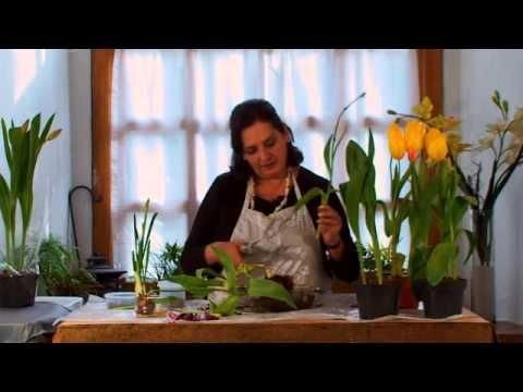 Cómo conservar TULIPANES 🌷 después de su floración