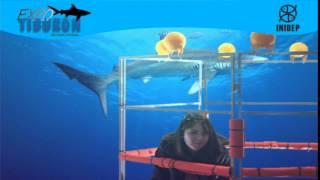 DIA 2 Expo Tiburon28