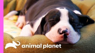 These Tiny Giants Are Looking For The Perfect Place To Nap | Too Cute!