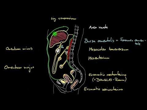 Rückenschmerzen rechten Seite für Männer