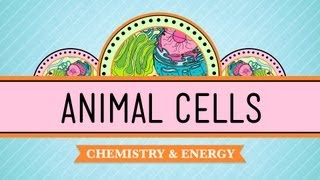 Eukaryopolis - The City of Animal Cells: Crash Course Biology #4