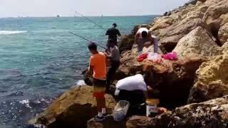 Ловля дорадо в средиземном море с берегами