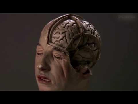 Dokumentarfilme 2017  Wenn das Gehirn überfordert ist   Doku 2016 NEU in HD