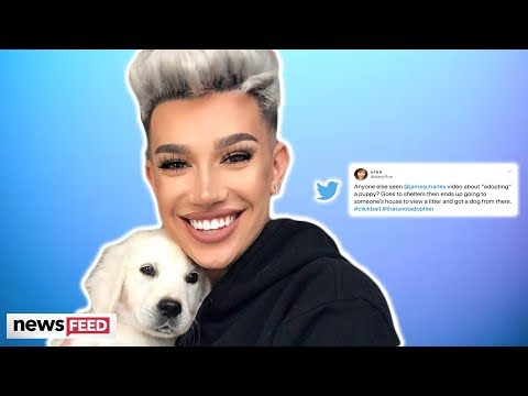 The Internet Is TORN Over James Charles 'Fake' Adopting A Dog!