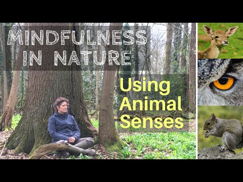 Mindfulness in Nature. Using our senses.