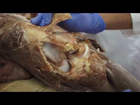 Clinic articulaciones Krasnoyarsk