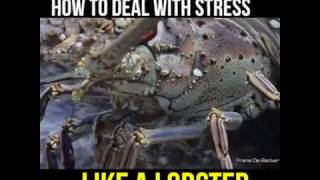 Be more like the lobster...