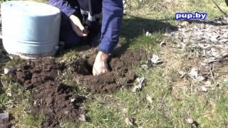 Как избавиться от кротов в саду, на огороде  How to get rid of moles in the garden and the garden
