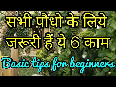 सभी पौधो के लिये जरूरी हैं ये 6 काम,Basic gardening tips for beginners,anvesha,s creativity